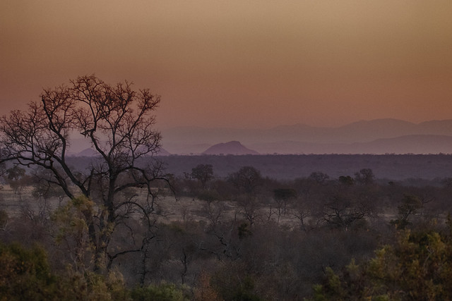 as sunset deepens the distant Drakensberg Mountains turn hazy blue. Evening at the end of a fantastic game drive. Elephant Plains Game Lodge, Sabi Sand Game Reserve, Kruger National Park, South Africa.