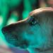 "<p><a href=""https://www.flickr.com/people/kot-orator/"">Kot Orator</a> posted a photo:</p>  <p><a href=""https://www.flickr.com/photos/kot-orator/48595321012/"" title=""Sad party dog""><img src=""https://live.staticflickr.com/65535/48595321012_2e8de2721e_m.jpg"" width=""240"" height=""160"" alt=""Sad party dog"" /></a></p>  <p></p>"