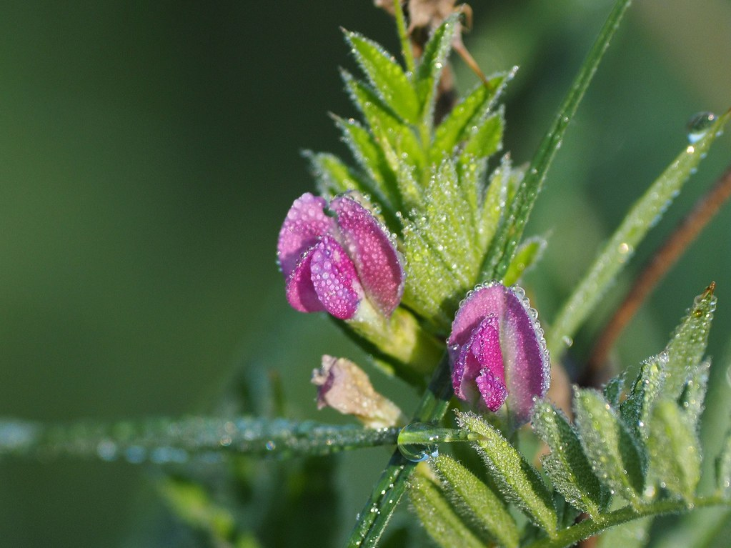 Kleine Blüten im Morgentau
