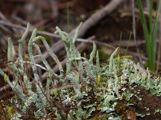 Moss and lichen (2 of 6)