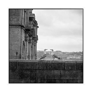 seagulls mirror • porto, portugal • 2019