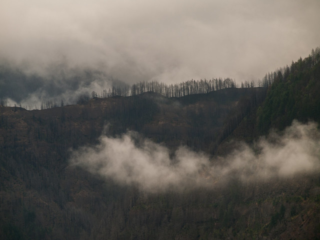 Eagle Creek Fire recovery from Beacon Rock, August 2019