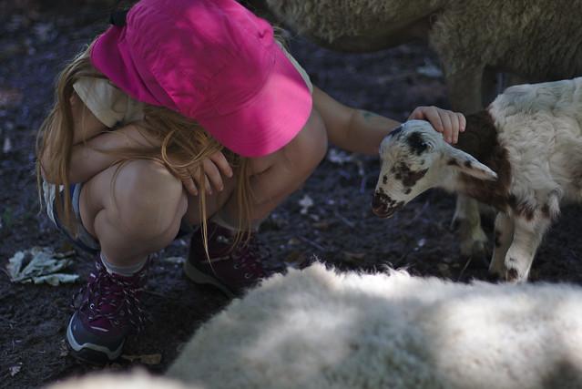 enfant et agneau