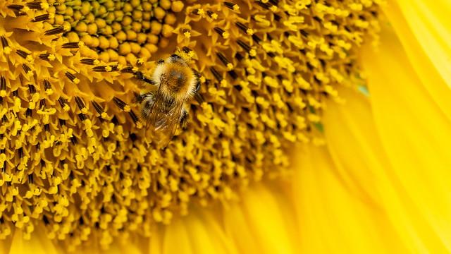 Search the humblebee