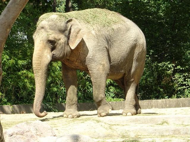 Elefanten_Aug19_15e_DRUMBO_kleinerSpaziergang_Mi_12h45_190821
