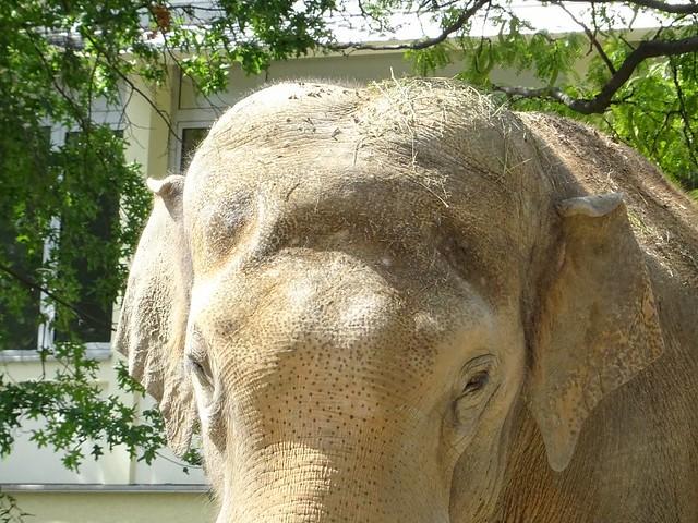 Elefanten_Aug19_12_VIKTOR_AugenStirnOhren_Mi_13h00_190821