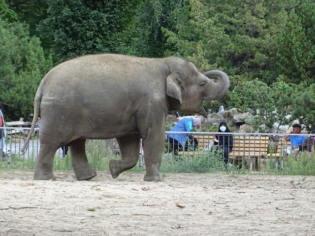 Elefanten_Aug19_7_ANCHALI_scheintHierKleineSHOWeinlageZuMachen_Mi_12h30_190821
