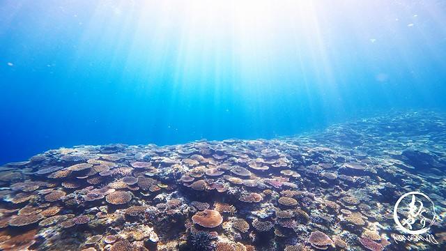 一面に広がる珊瑚の群生