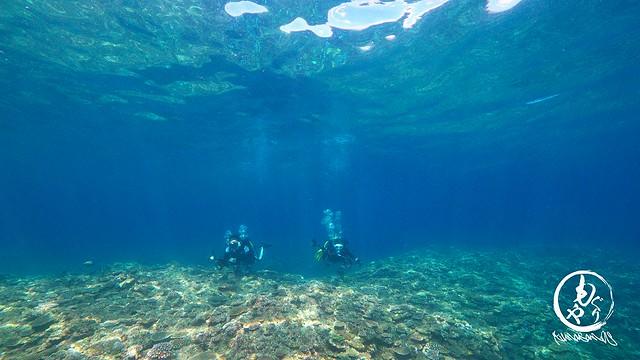 珊瑚キレイすぎて何しても楽しい。。