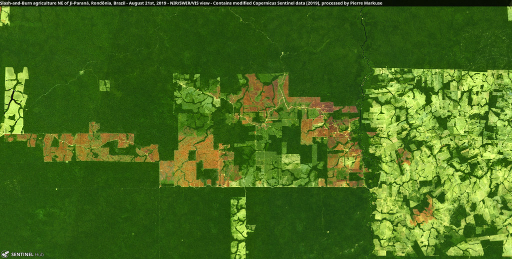 Slash-and-Burn agriculture NE of Ji-Paraná, Rondônia, Brazil - August 21st, 2019