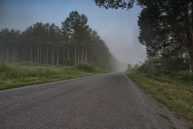 Country Road on a Misty Morning
