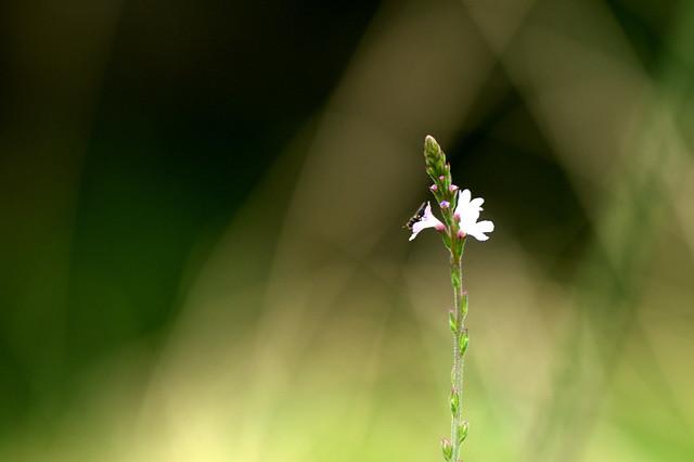 Fragile petite lumière...