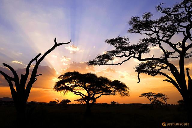 20190722 Tanzania-Serengueti (1850) R01