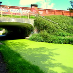 Bridge across the green canal