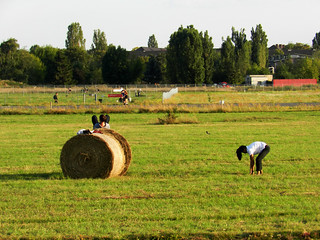 field and using straw bales