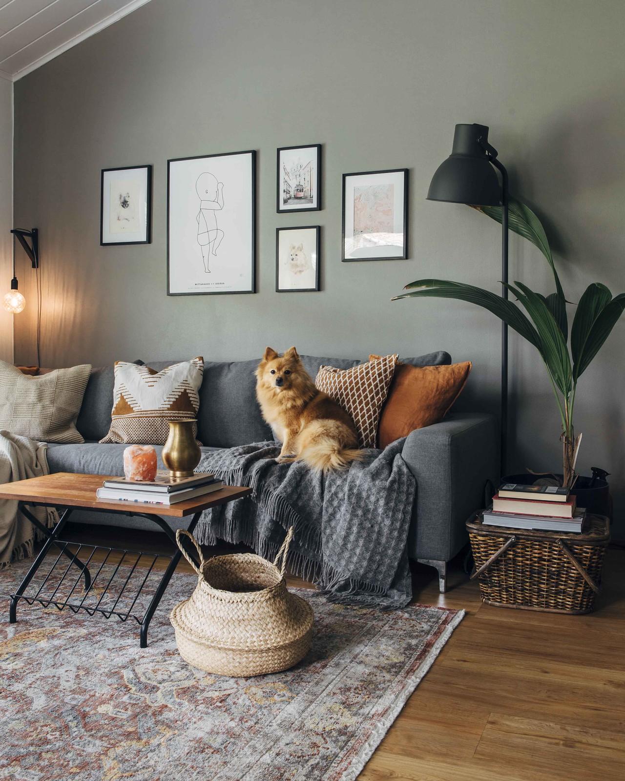 Tunnelmallinen olohuone, jossa harmaa sohva. Sohvalla istuu koira, joka katsoo kameraan.