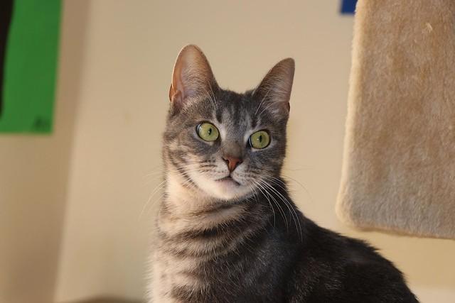 Mishka in the cat room (1).