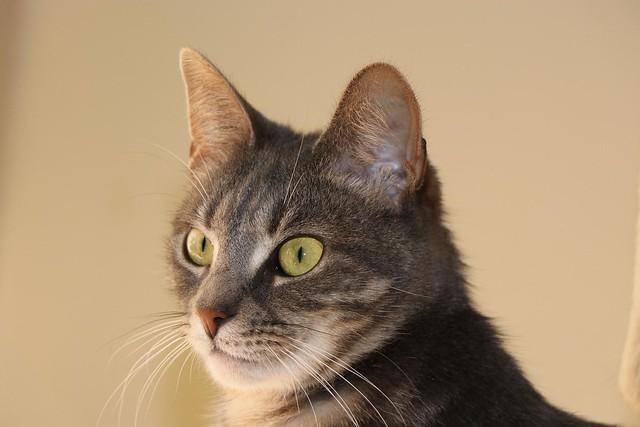 Mishka in the cat room (2).