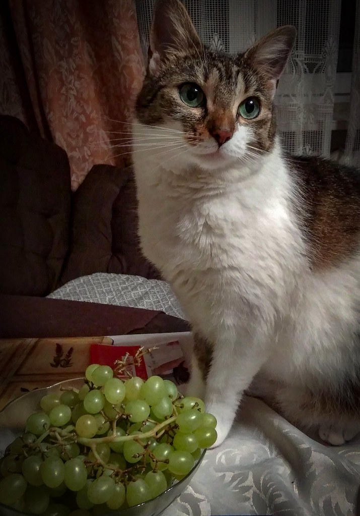 a cat with green grapes