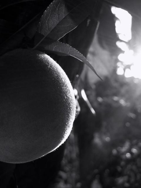 Peach. Monochrome. Macro. Light and shadow.