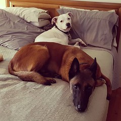 Both Djaro and Roxy prefer my side of the bed. 🤔