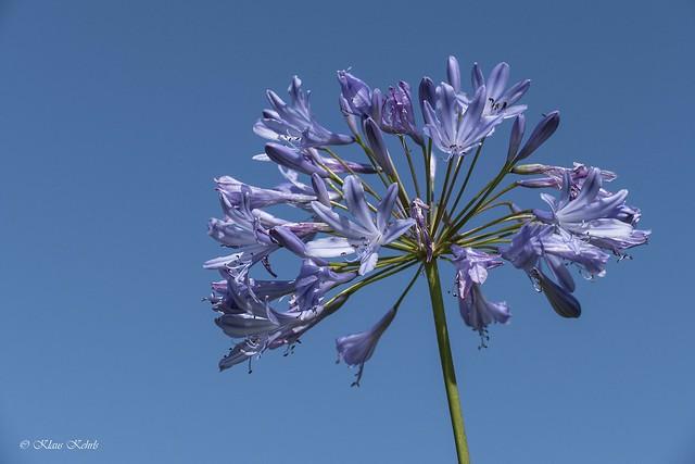 Blue - 20081901