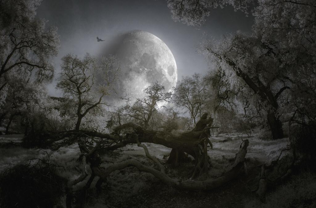 Hunting Moon - Toned IR