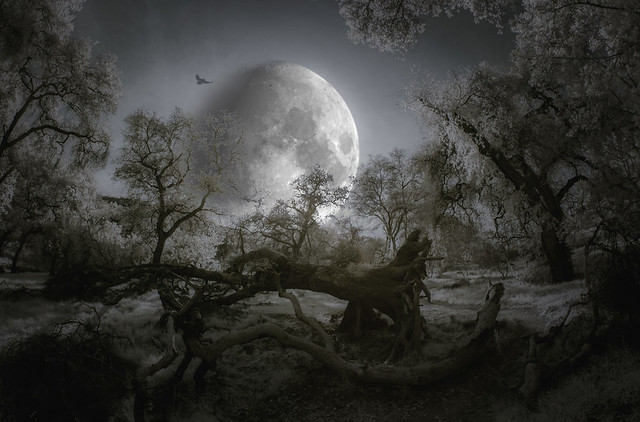 Hunting Moon - Toned IR