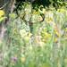 _D855614.jpg by bwpickering