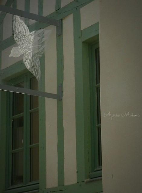 L'oiseau à la fenêtre...