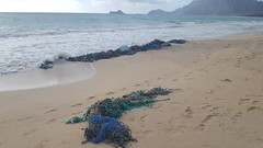Hawaiian Electric at Bellows Beach Cleanup — Aug. 17, 2019: An abundance of ropes were found along the coastline.