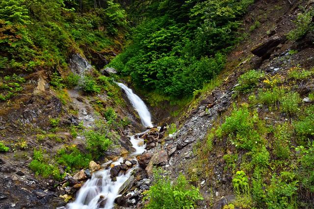 Green and Yellow Lushness Around Hard Creek