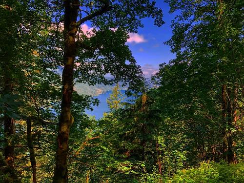 cultuslake chilliwack view trees nature britishcolumbia hiking peaceful beautiful forest viewpoint lake