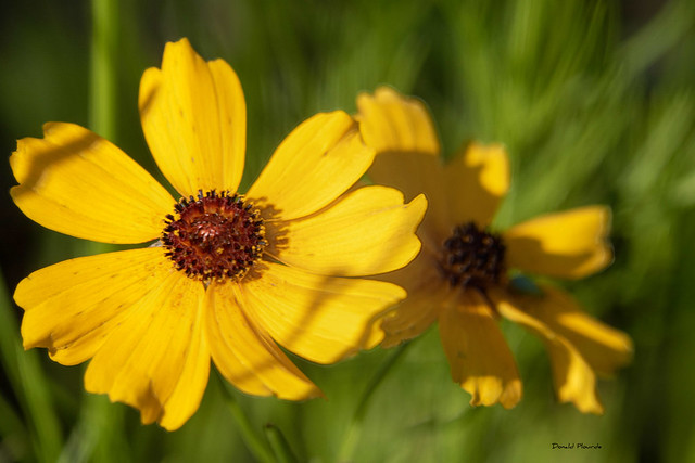 Lumiere sur le jaune / Light on the yellow (Série 4-5)