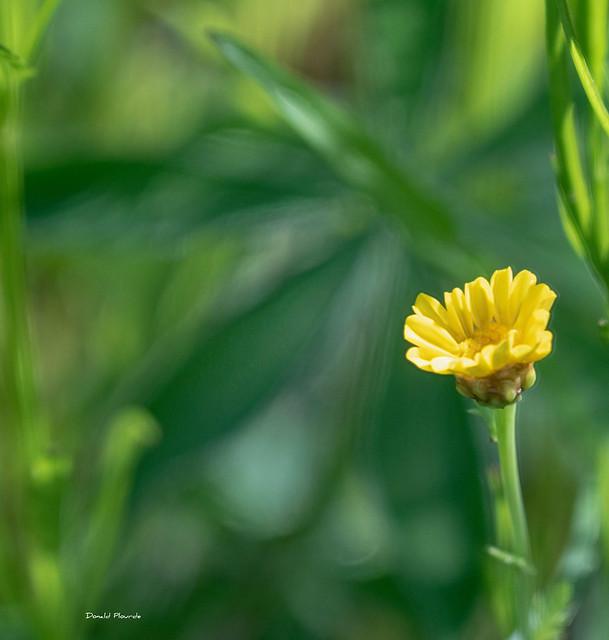 Jaune sur vert / Yellow on green (Série 2-5)