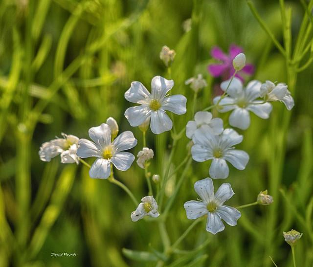 Éclats blancs / White blossoms (Série 1-5)