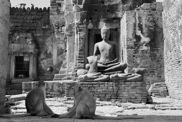 Buddha And Monkeys