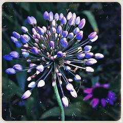 ***floral fireworks***💥⚫️🌺⚫️💥
