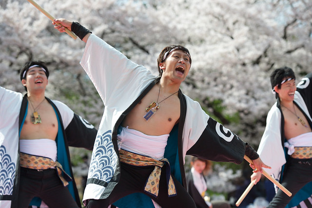 Kyoto Sakura Yosakoi 42
