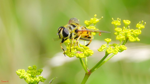 Insect - 7281