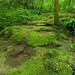 Mousse sur le ruisseau Tuffier de Norvaux - Amancey