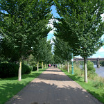Tree lined path at Miller Park, Preston