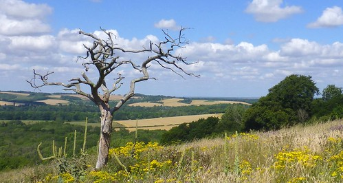 Lone Tree, Old Winchester Hill, Hampshire