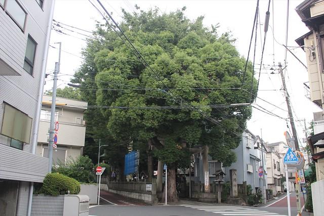 nakameguro-gosyuin001
