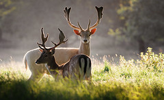 Backlight Bucks