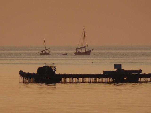 Barcas y batea