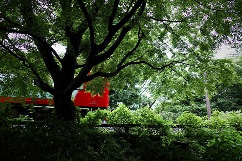 箱根登山鉄道と紫陽花 2