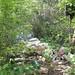 Костромичей отправили отдыхать на кладбища и помойки
