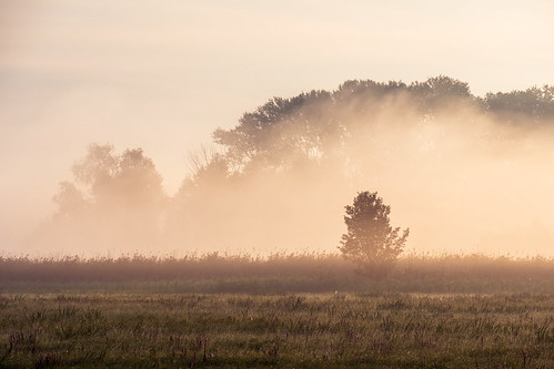 landscape nature poland mazovia masovia summer tree trees flora fog mist sunrise morning dawn
