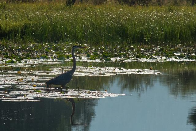 Swan River, Big Fork, Montana